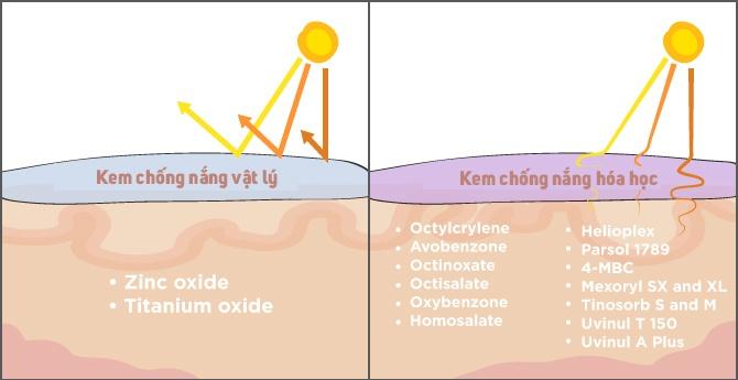 Phân Biệt - Kem Chống Nắng Vật Lý Và Hóa Học