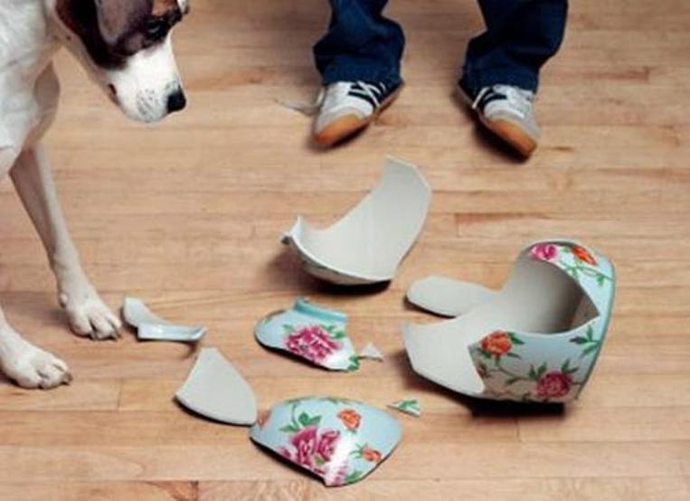 Tránh làm đổ vỡ vật dụng gia đình